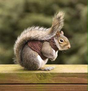 From Facebook page 'Squirrels Make Me Happy'