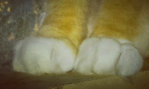 Why are cat paws so cute?! #SQUEEE #CatLadyPorn